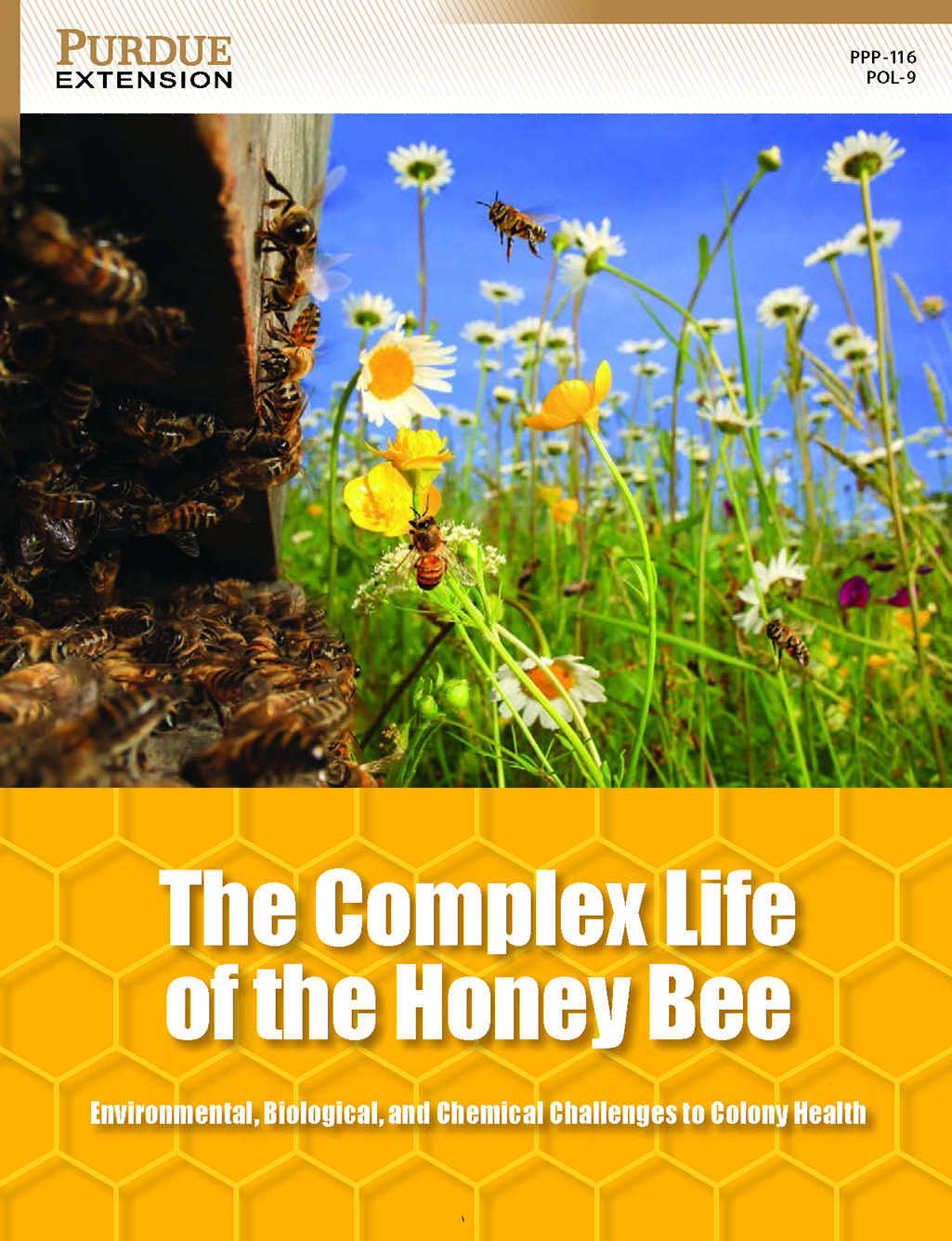 The complex life of the honey bee purdue pesticide programs 1betcityfo Gallery