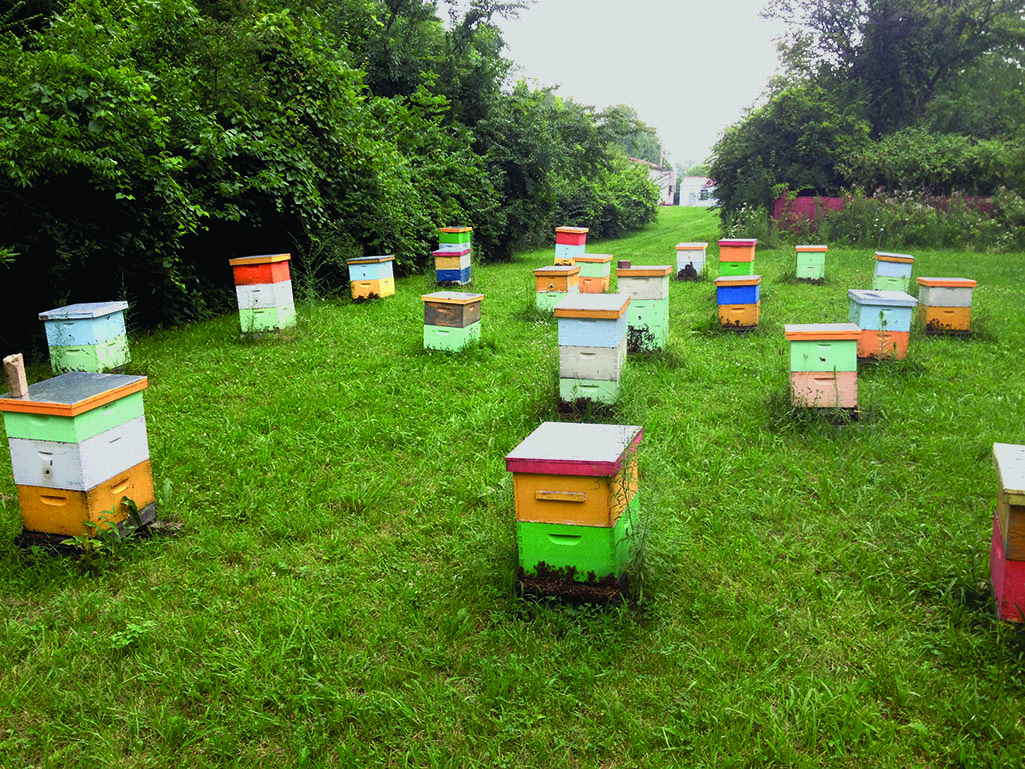 The complex life of the honey bee purdue pesticide programs a complicated question with a complicated answer xflitez Images
