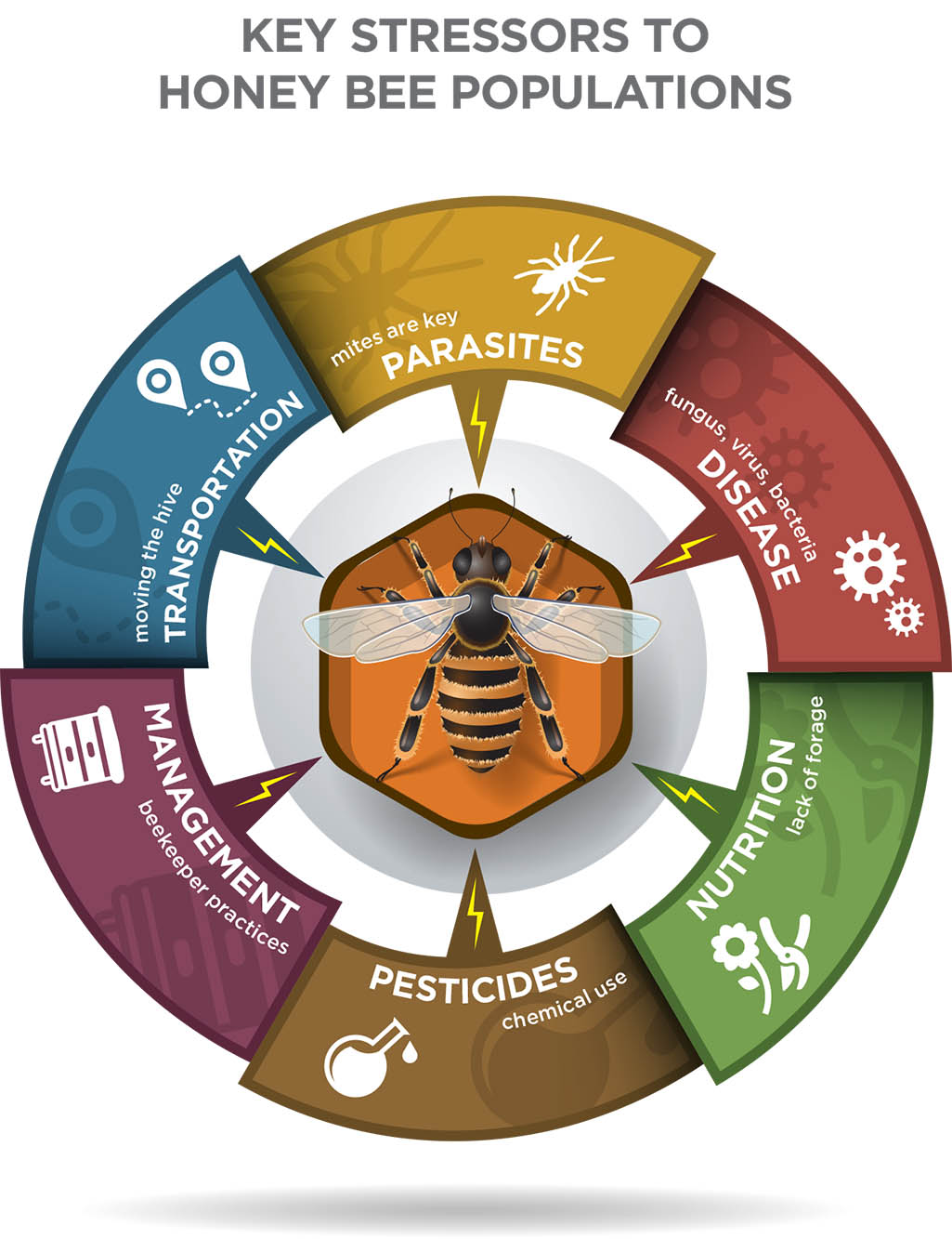 The complex life of the honey bee purdue pesticide programs key stressors to honey bee populations xflitez Images