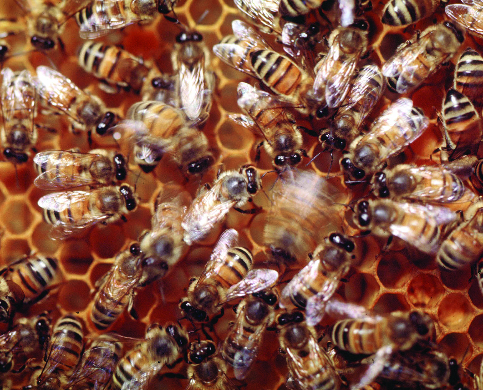 The complex life of the honey bee purdue pesticide programs an information processing center xflitez Images
